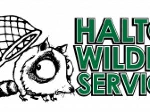 Halton Wildlife - Animal Removal Services